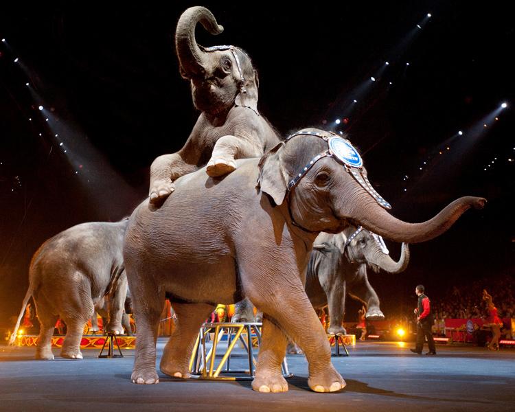 Asian-Elephants