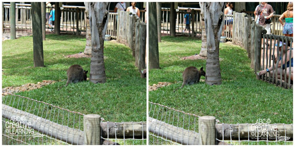 Busch Gardens Tampa Kangaroo Feeding