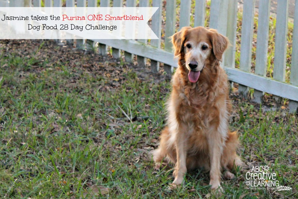 Jasmine takes the Purina ONE Smartblend Dog Food 28 Day Challenge Senior Formula
