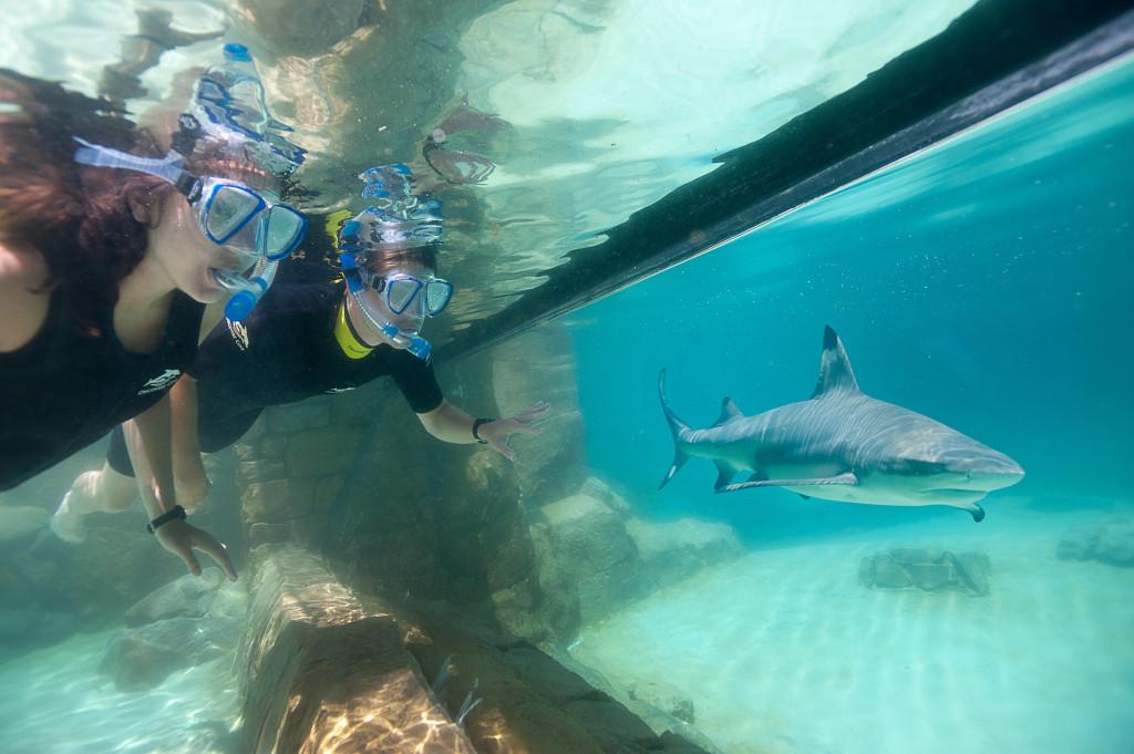 DCO-Grand_Reef-Shark_Viewing