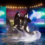 New Night Time Activities At SeaWorld Orlando and Aquatica, SeaWorld's Waterpark