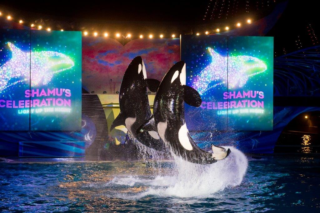 New Night Time Activities At SeaWorld Orlando and Aquatica, SeaWorld's Waterpark One Ocean