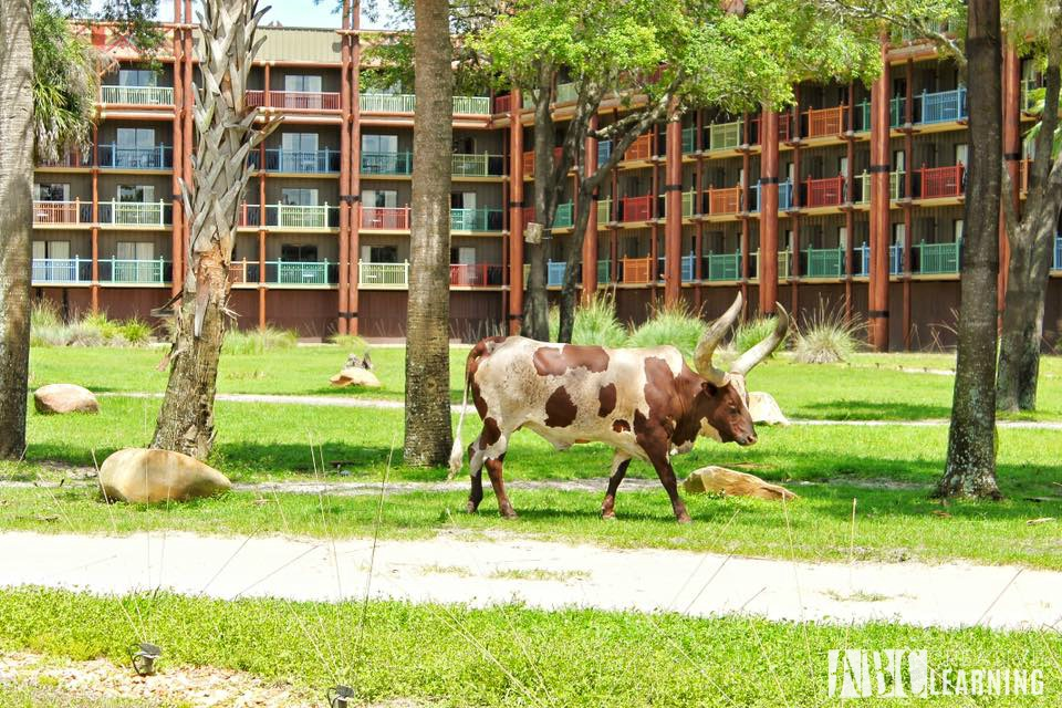 Reasons To Stay At Disney's Animal Kingdom Lodge #ZootopiaEvent Animals1