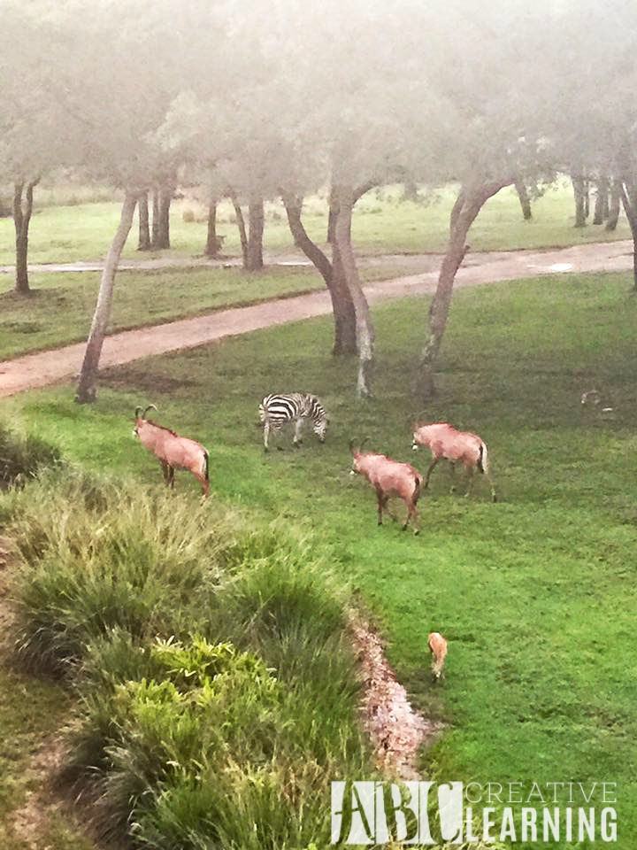 Reasons To Stay At Disney's Animal Kingdom Lodge #ZootopiaEvent Animals2