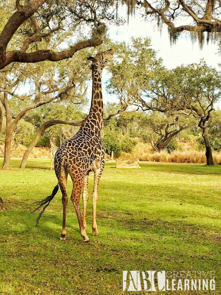 7 Reasons To Visit Disney's Animal Kingdom Theme Park 6