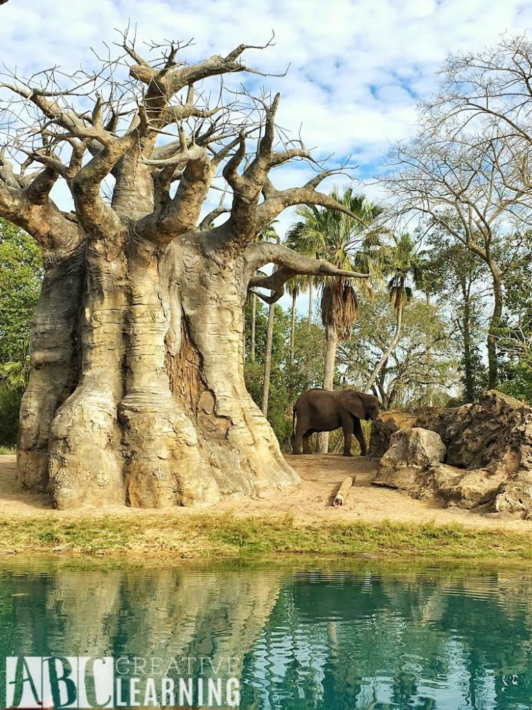 7 Reasons To Visit Disney's Animal Kingdom Theme Park E