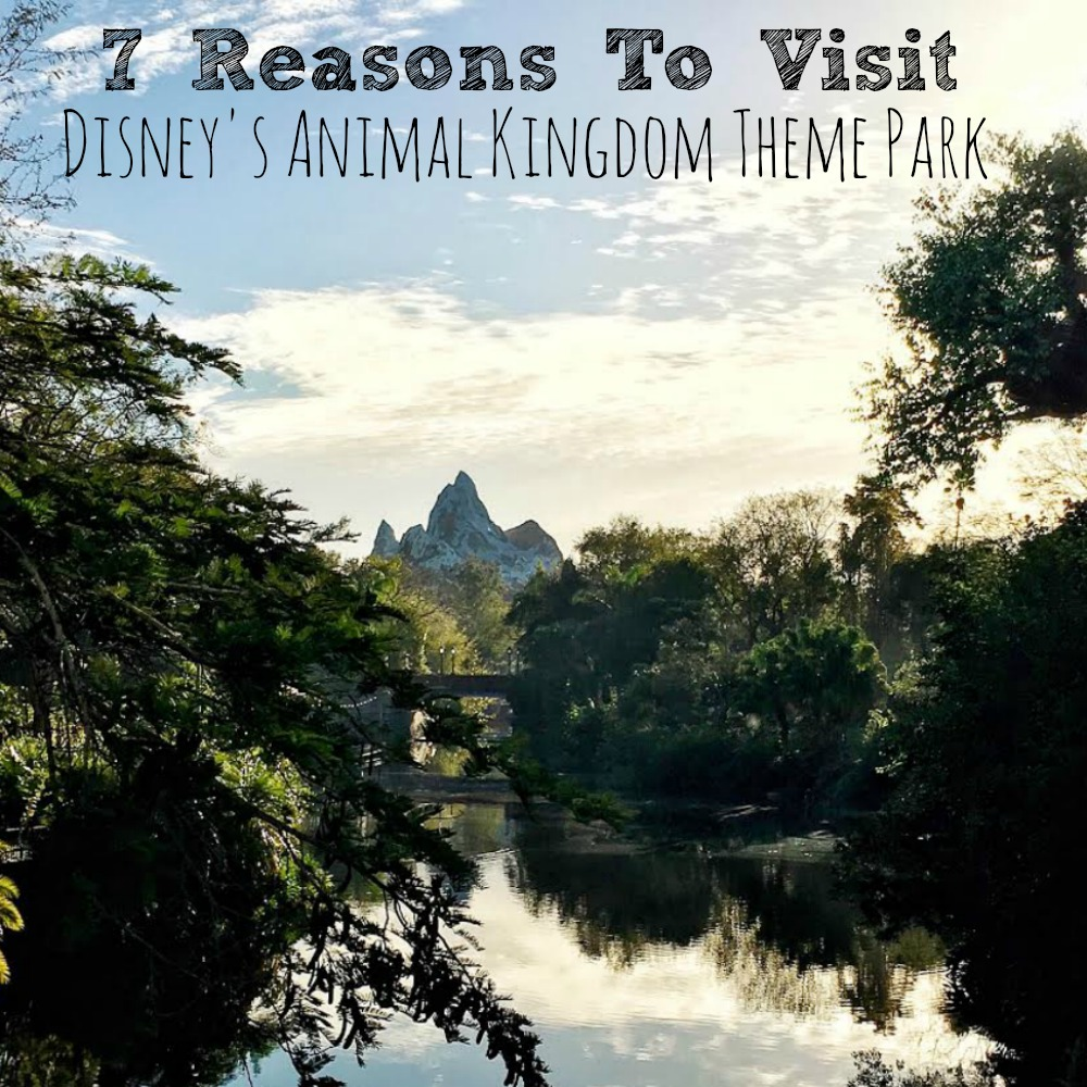 a visit to the animal kingdom Regardless of why you're here, i'm happy you stopped by for a visit now, let's cut   walt disney world's animal kingdom is in florida contrary.