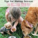 Tips For Making Summer the Best For Your Pets