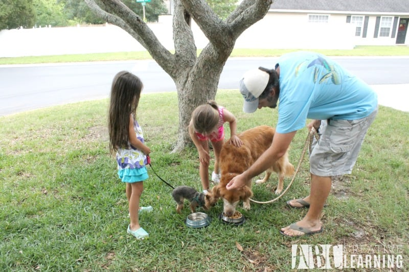 Tips For Making Summer the Best For Your Pets fam
