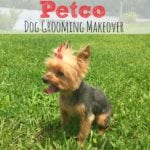 Petco Dog Grooming Makeover