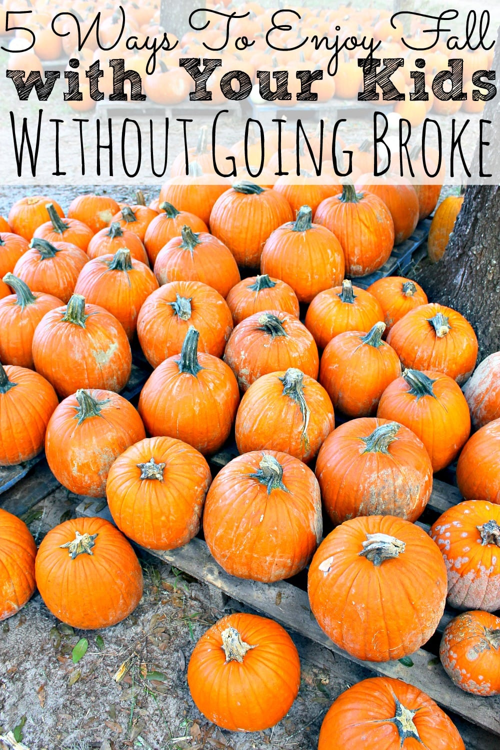 5 Ways To Enjoy Fall With Your Kids Without Going Broke - simplytodaylife.com