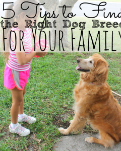 5 Tips to Find the Right Dog Breed for Your Family