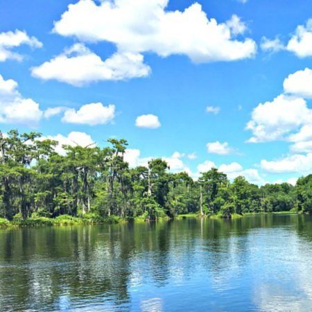 Boat Ride at Wakulla Springs State Park | Family Visit To Tallahassee Florida