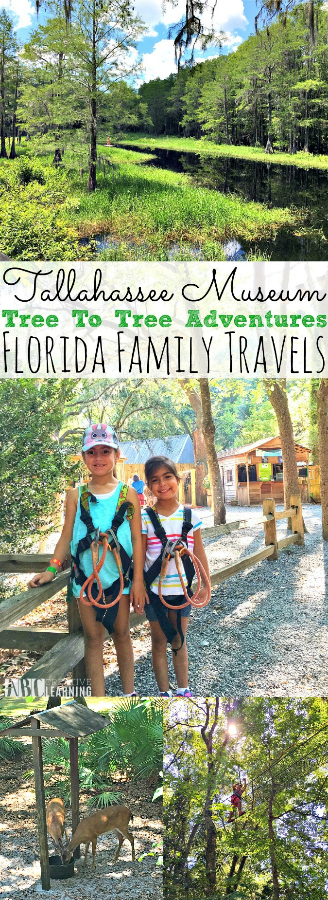 Tallahassee Museum Tree to Tree Adventures