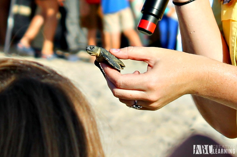Teaching Our Youth To Take Care Of The Earth | Tour de Turtles at Disney's Vero Beach Resort - Baby Turtles