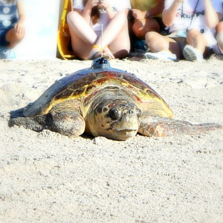 Teaching Our Youth To Take Care Of The Earth | Tour de Turtles at Disney's Vero Beach Resort