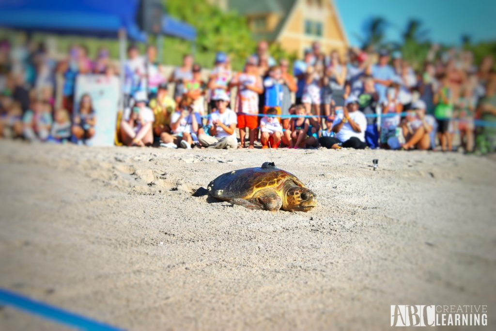 Teaching Our Youth To Take Care Of The Earth | Tour de Turtles at Disney's Vero Beach Resort - abccreativelearning.com