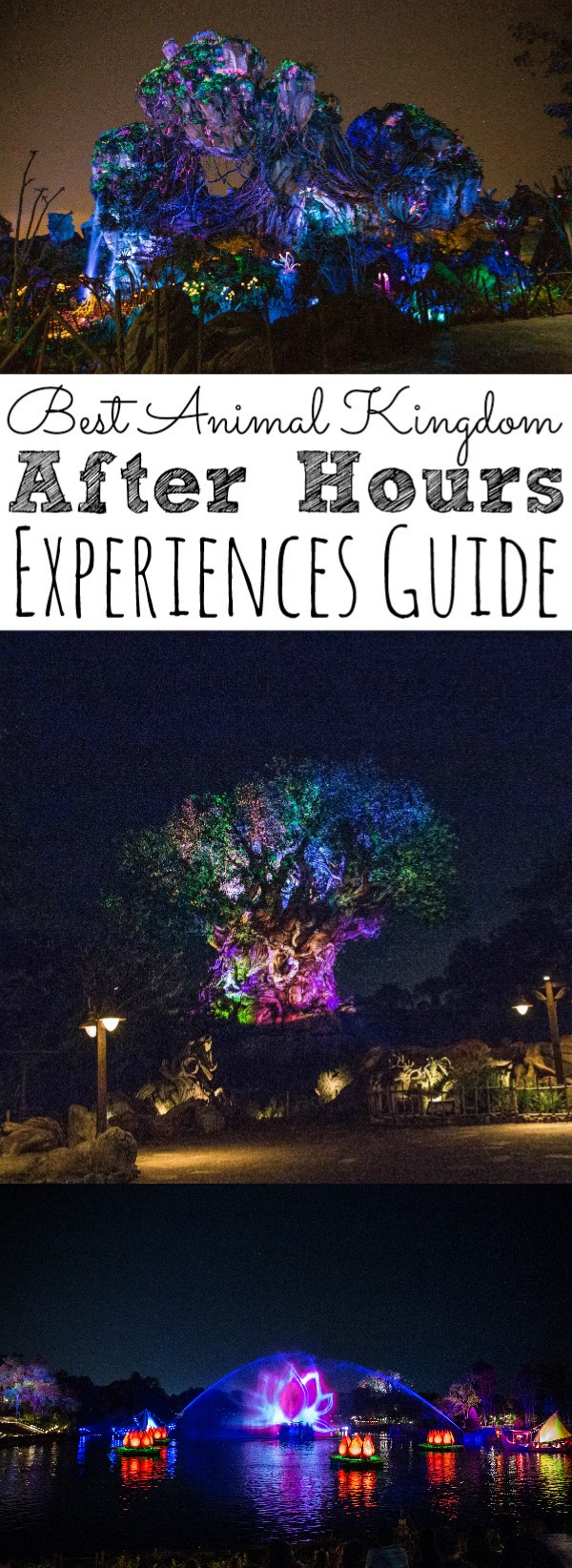 Animal Kingdom After Hours Experiences