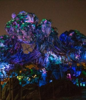 Best Animal Kingdom After Hours Experiences | A Night-Time Guide